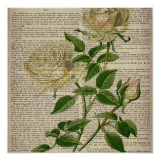 romantic botanical flower art girly white rose poster