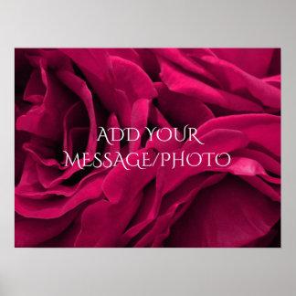 Romantic fuchsia pink velvet roses floral photo poster