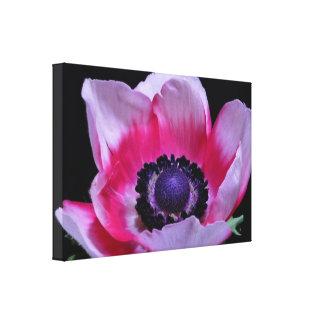 Romantic Pink Anemone Flower Black Wall Art