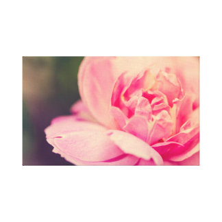 Romantic pink rose canvas print
