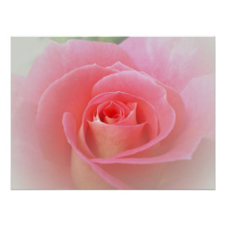 Romantic Pink Rose Print