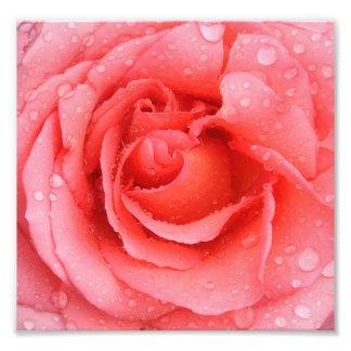 Romantic Pink Rose Water Drops Photo Print