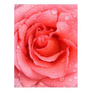 Romantic Pink Rose Water Drops Postcard