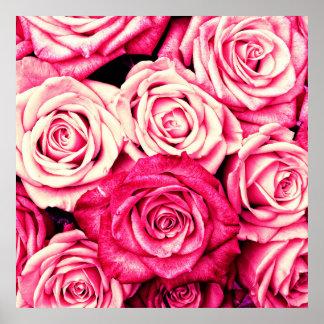 Romantic Pink Roses Poster