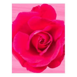 Romantic Red Pink Rose v2 Postcard