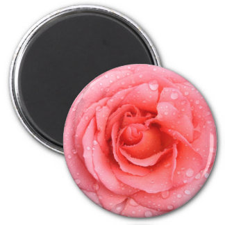 Romantic Red Pink Rose Water Drops Magnet