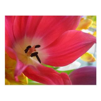 Romantic Red Tulip Postcard