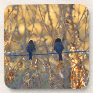 Romantic sparrow bird couple on a wire, Photo Beverage Coaster