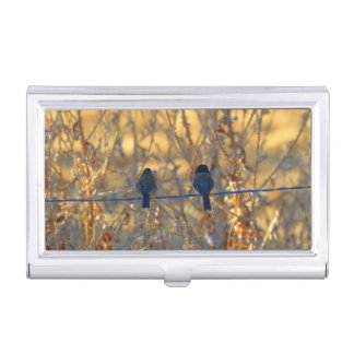 Romantic sparrow bird couple on a wire, Photo Business Card Holders