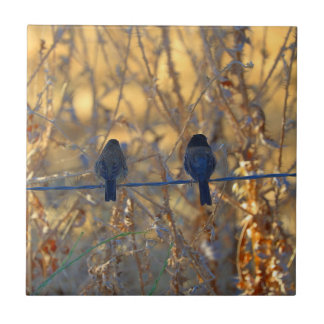 Romantic sparrow bird couple on a wire, Photo Ceramic Tile