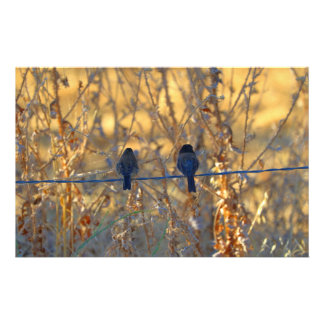 Romantic sparrow bird couple on a wire, Photo Custom Stationery
