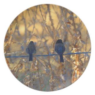 Romantic sparrow bird couple on a wire, Photo Plates