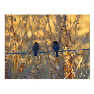 Romantic sparrow bird couple on a wire, Photo Postcard