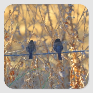 Romantic sparrow bird couple on a wire, Photo Square Sticker