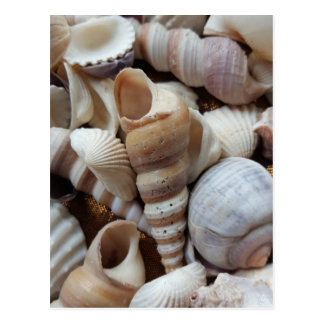 Romantic Tropical Exotic Sea Shells Beach Love Postcard