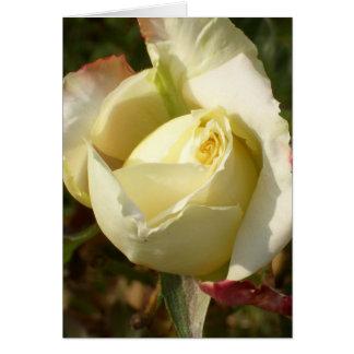 Romantic White Rosebud CricketDiane Roses Greeting Card