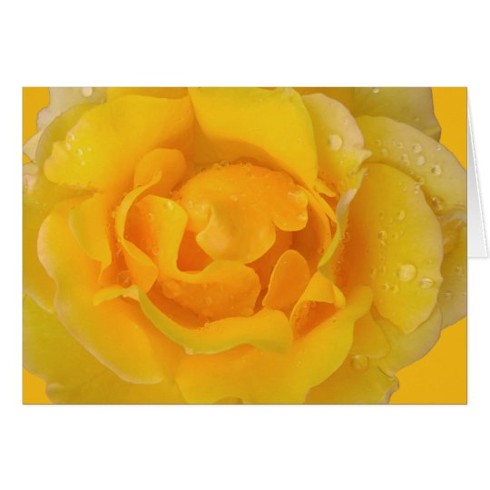 Romantic Yellow Rose Water Drops Card