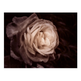 Romantica- this rose says love postcard