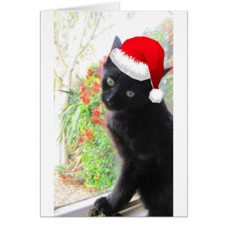 Romeo at Christmas Card