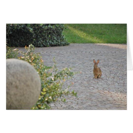 """Romeo"" Rabbit Card"
