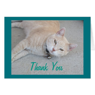 Romeo The Cat Thank You Greeting Card