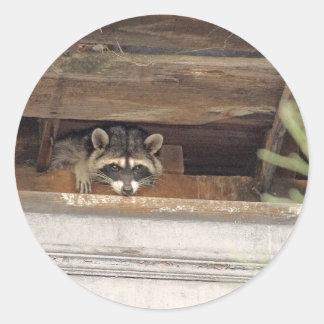 Roofie Raccoon Sticker