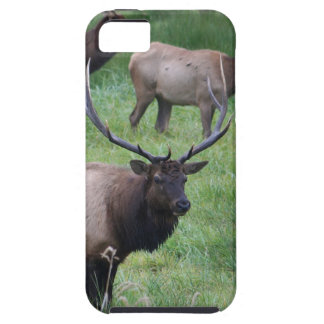 Roosevelt Elk in Oregon iPhone 5 Case