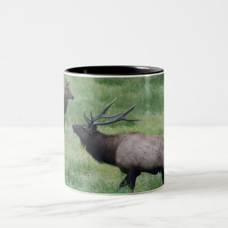 Roosevelt Elk in Oregon Two-Tone Coffee Mug