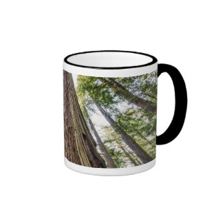 Roosevelt Grove Coffee Mug
