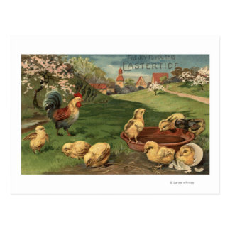 Rooster and Chicks Postcard