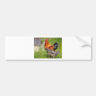 Rooster and hen bumper sticker