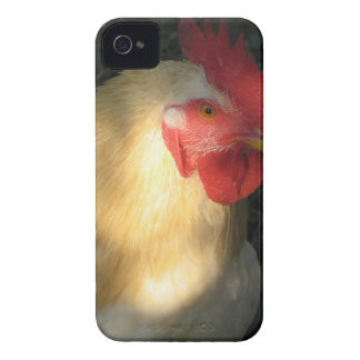 Rooster Case-Mate iPhone 4 Cases