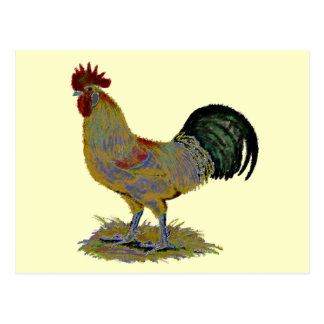 Rooster:  Freestyle Postcard