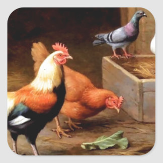 Rooster hen pigeons square sticker