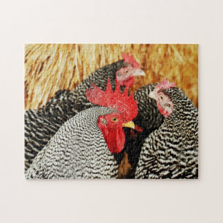 Rooster & Hens Chicken Puzzle