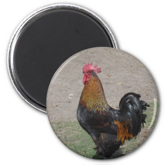 rooster magnet