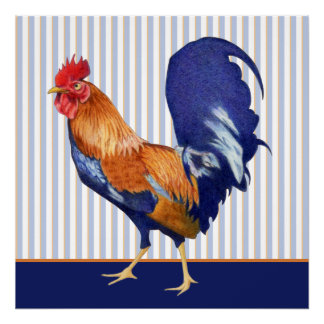 Rooster stripes Poster