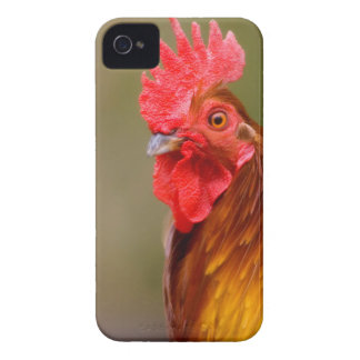 Rooster with Red Comb Head iPhone 4 Cover