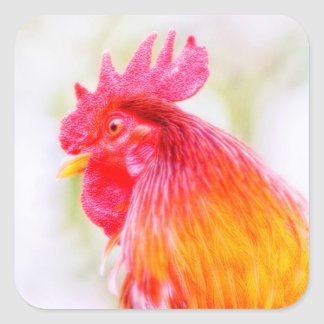 Rooster with Red Comb Head Square Sticker
