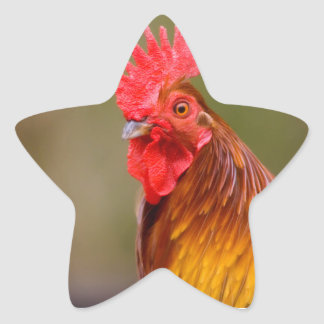 Rooster with Red Comb Head Star Sticker