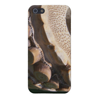Root End Shakuhachi iPhone 5/5S Covers