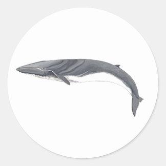 Rorcual common sticker - Aim whale to sticker