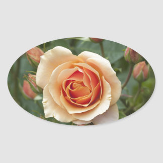 rosa-1859002 oval sticker