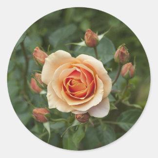 rosa-1859002 round sticker
