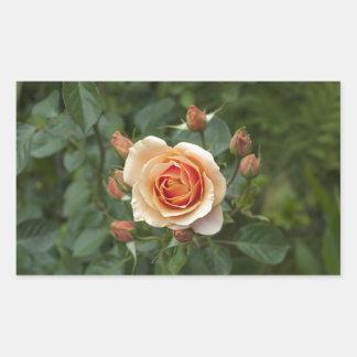 rosa-1859002 sticker