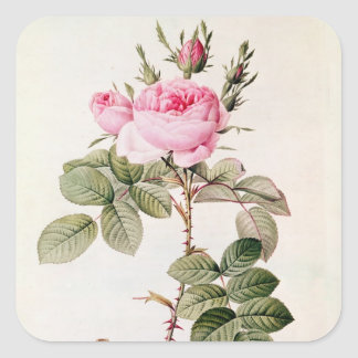 Rosa Bifera Officinalis, from 'Les Roses' Square Sticker