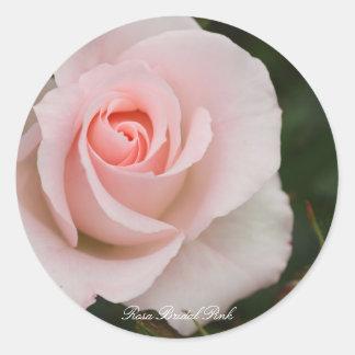 Rosa Bridal Pink Round Sticker