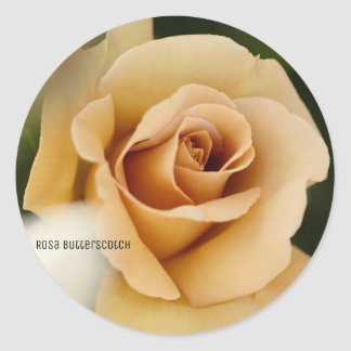 Rosa Butterscotch Classic Round Sticker