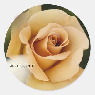 Rosa Butterscotch Round Sticker