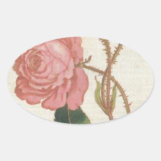 Rosa Cenifolia Muscosa Oval Sticker